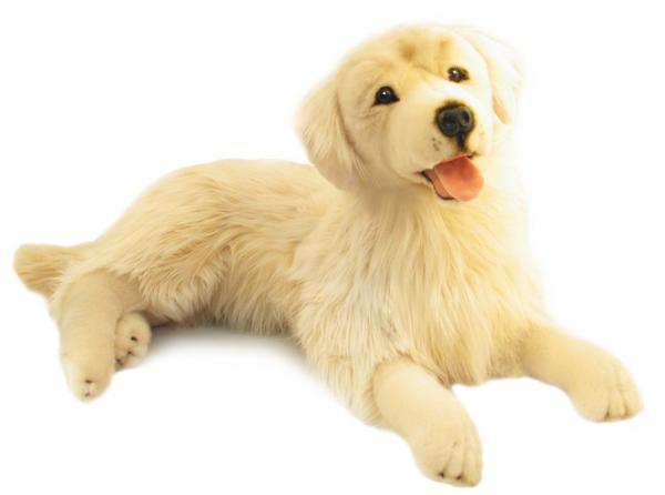 spencer-golden-retriever-main-103-103