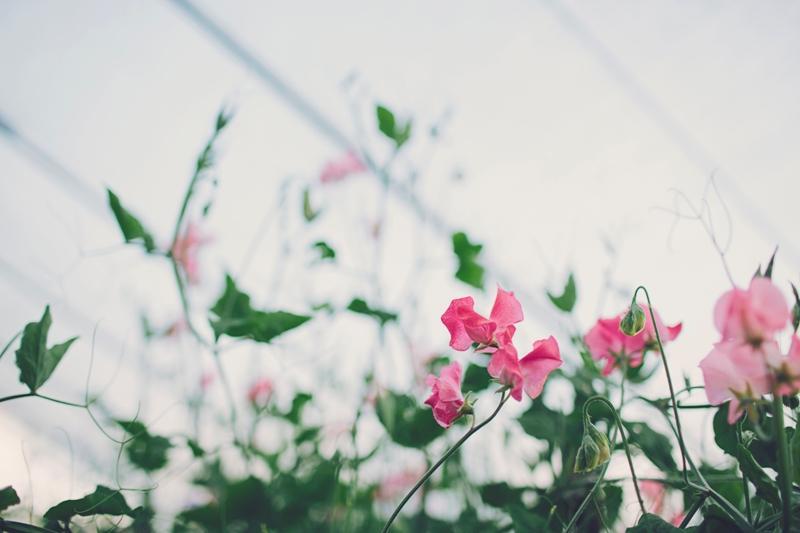 SummerJamSession_025
