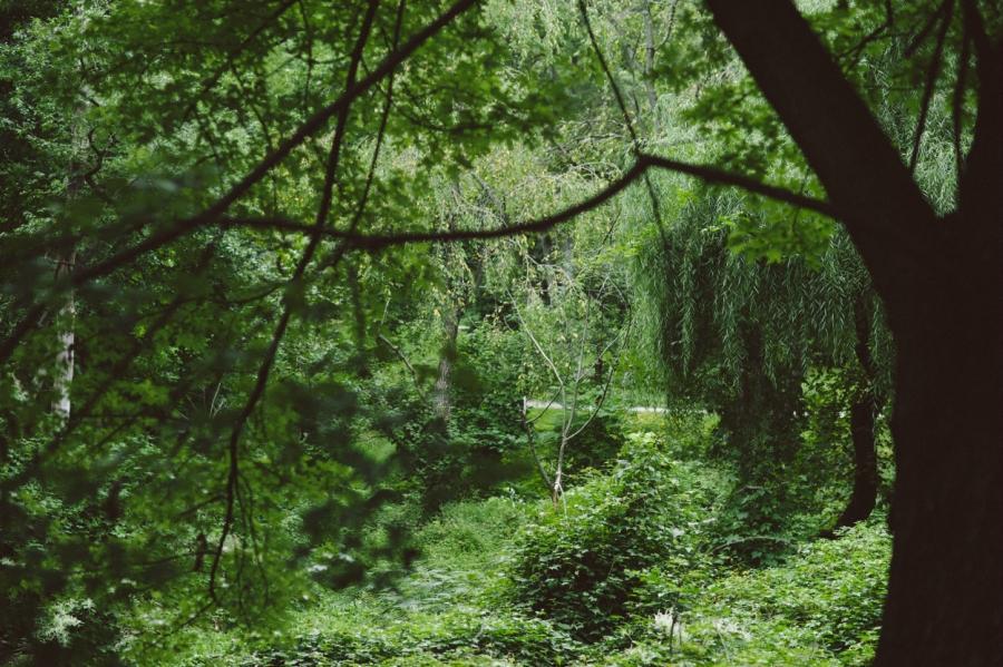 BeFunky_Wissahickon Park_Engagement_Alix Passage__01.jpg