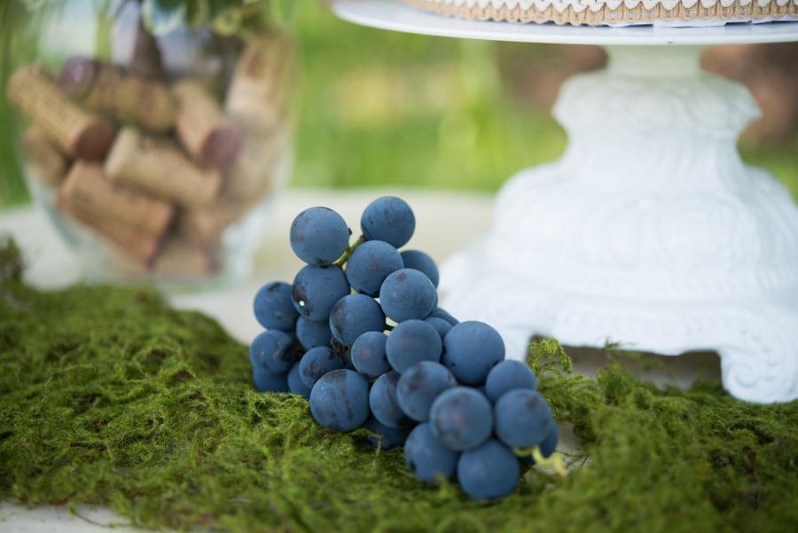 Vineyard-13 (900x601)