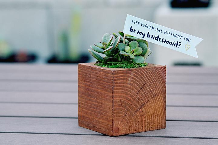 bridesmaid-succulent