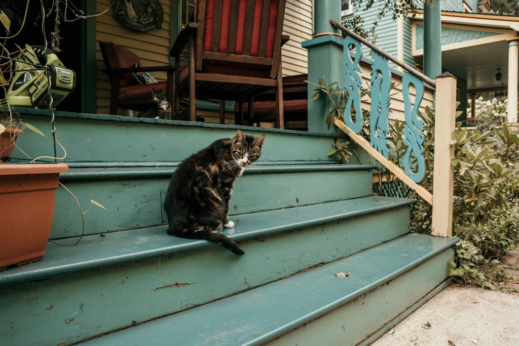calico cat sitting on blue steps